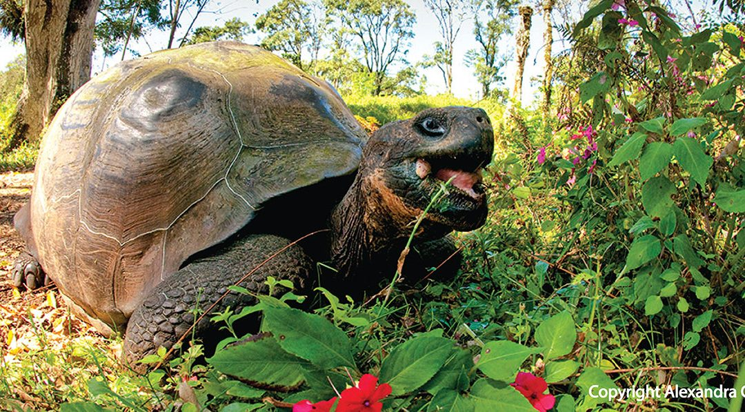 Galapagos with Lindblad Expeditions-National Geographic