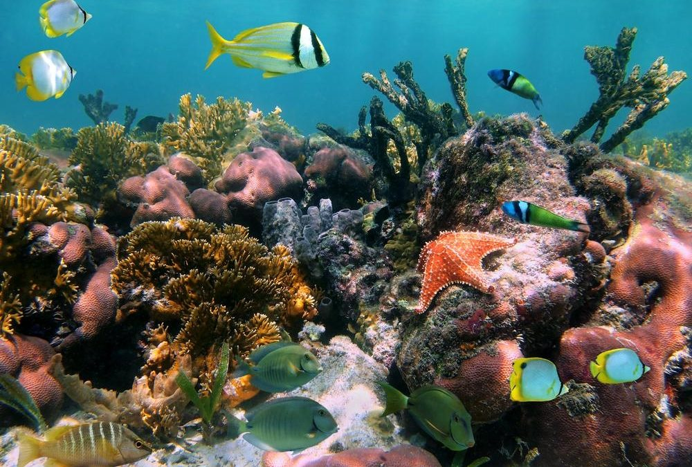 Luxury below the surface – an underwater experience