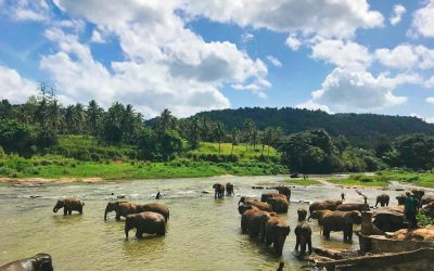 Sri Lanka: 6 reasons to visit in 2019
